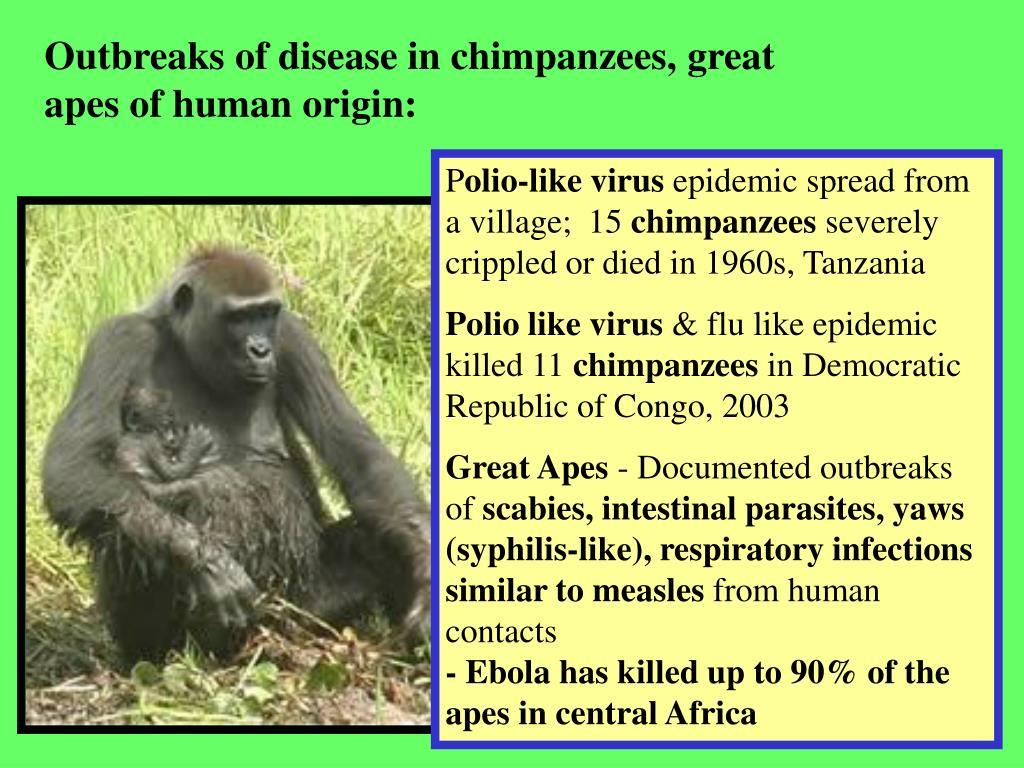 Outbreaks of disease in chimpanzees, great apes of human origin: