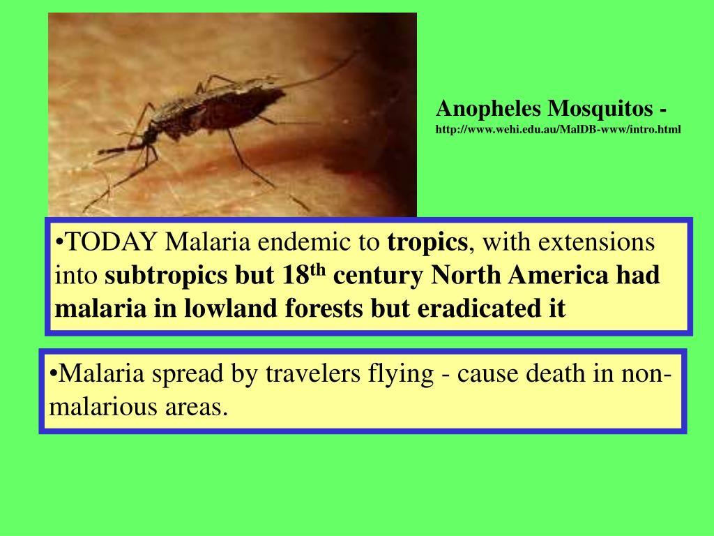 Anopheles Mosquitos -