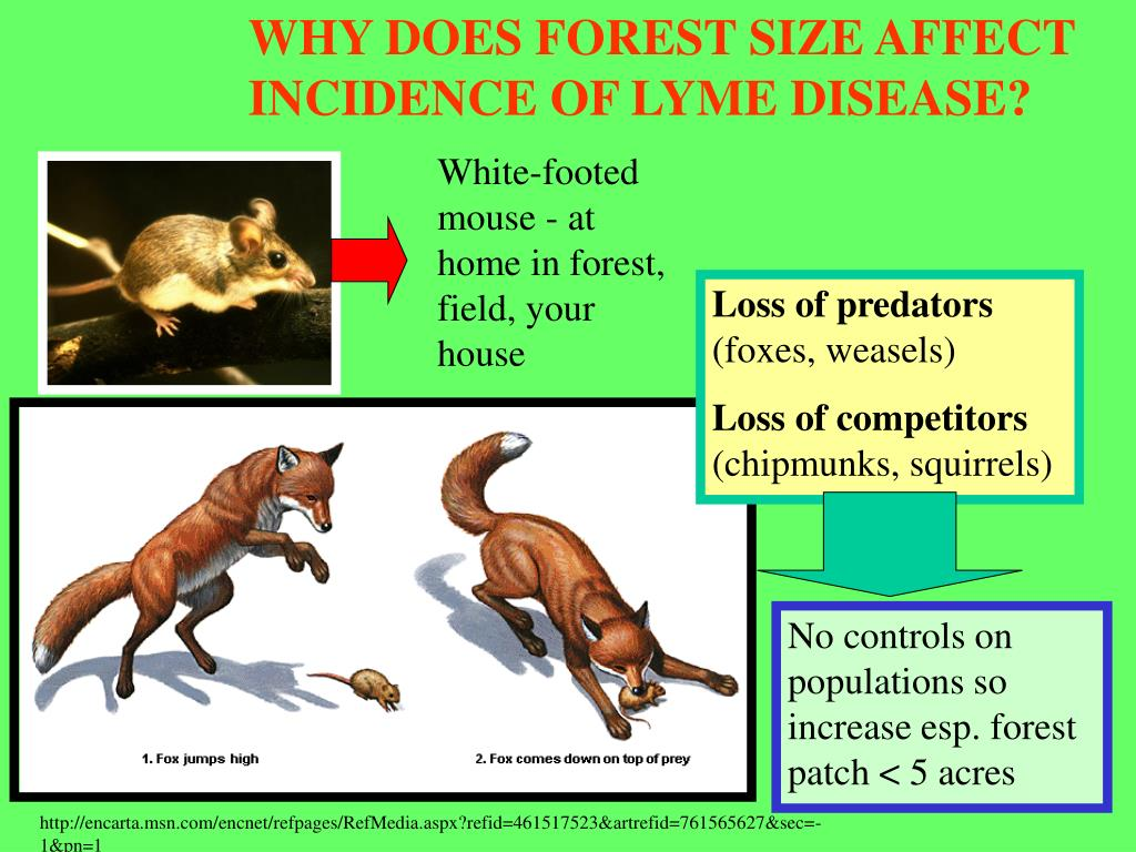 WHY DOES FOREST SIZE AFFECT INCIDENCE OF LYME DISEASE?