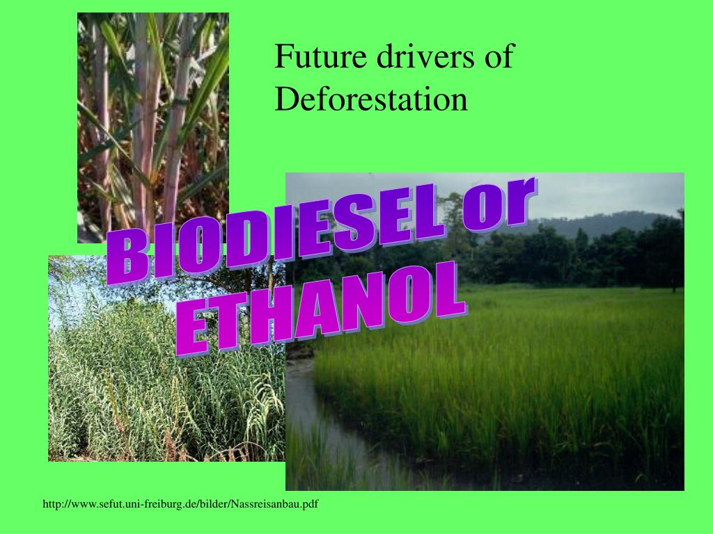 Future drivers of Deforestation