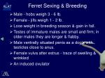 ferret sexing breeding