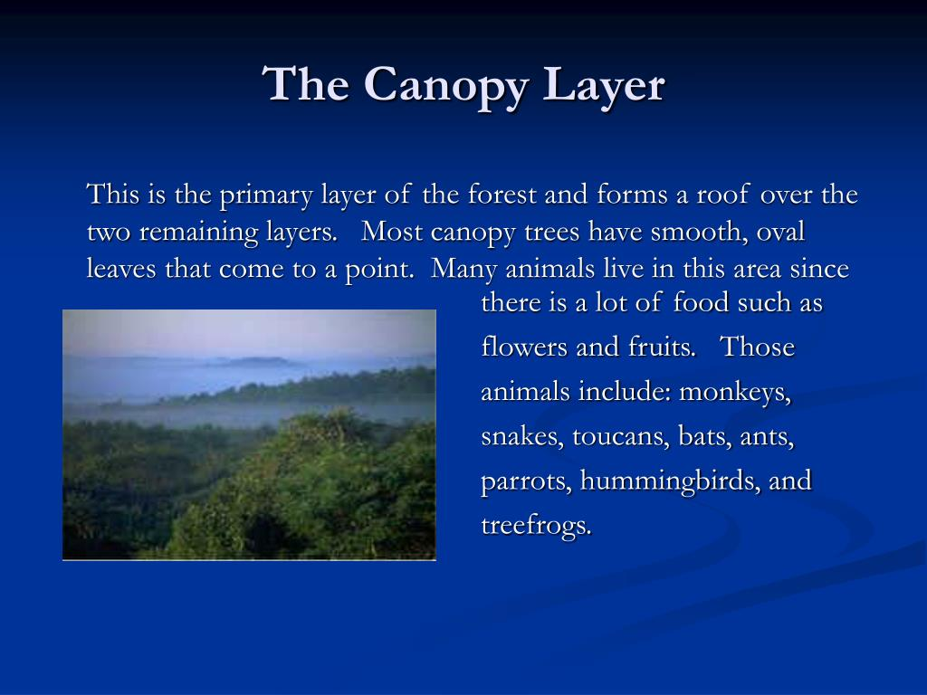 The Canopy Layer