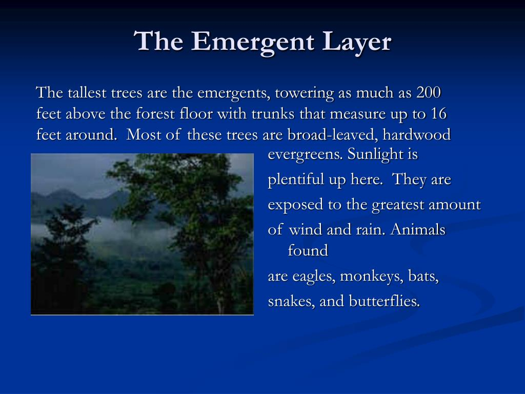 The Emergent Layer