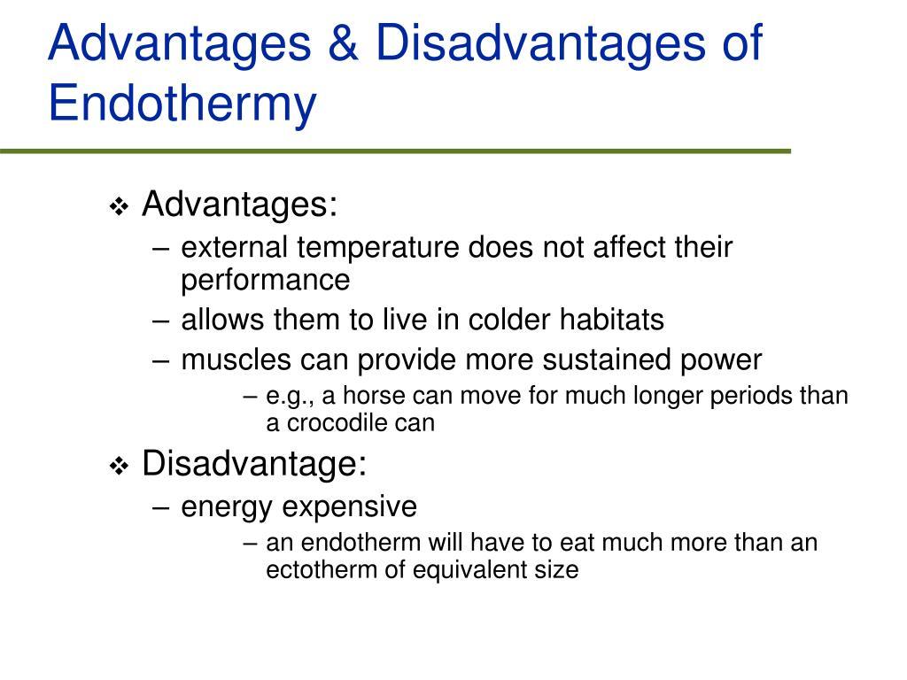 Advantages & Disadvantages of Endothermy