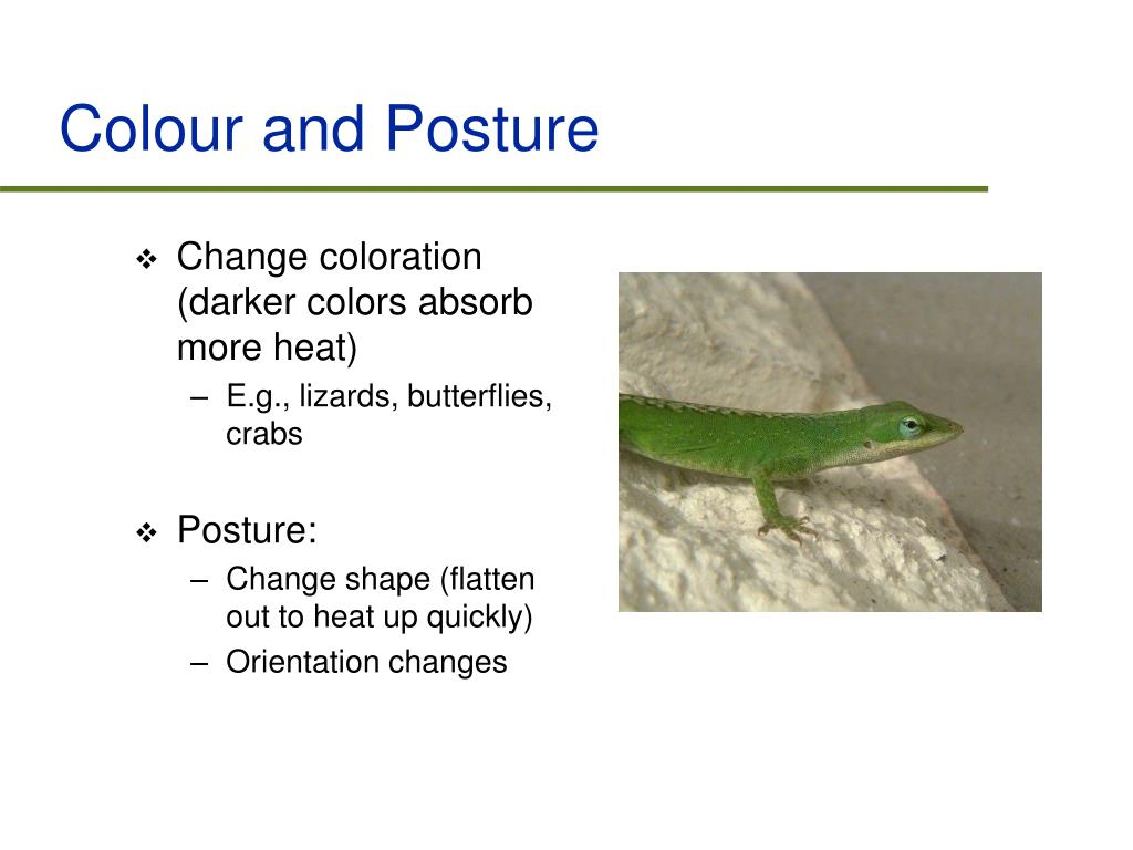 Colour and Posture
