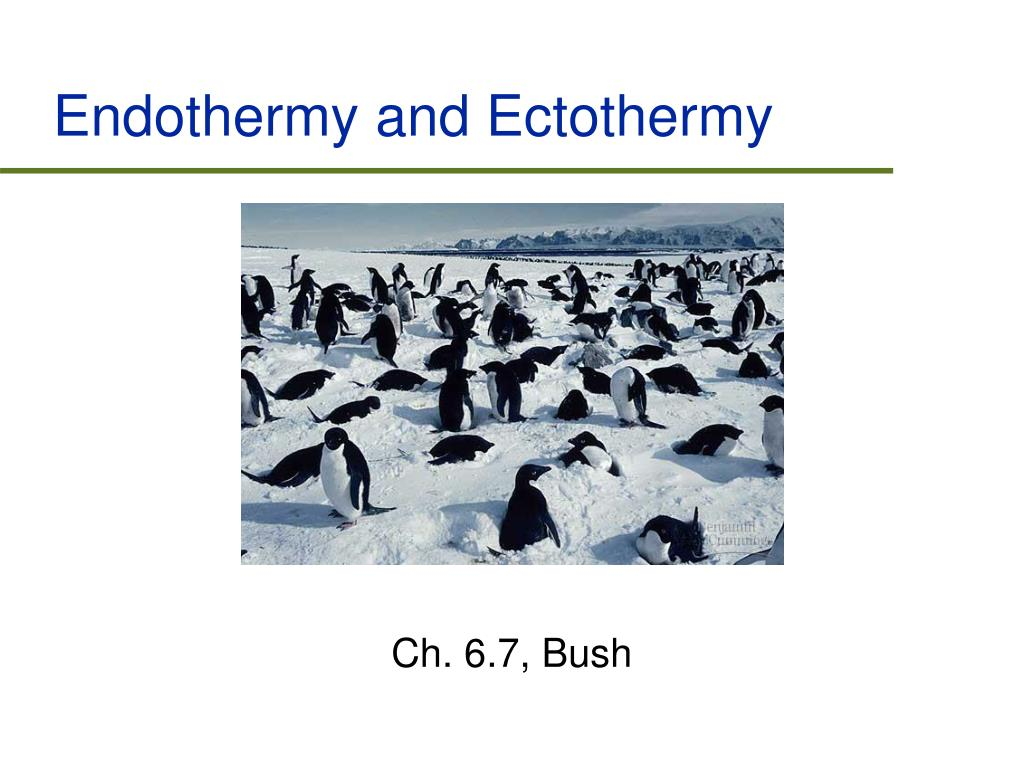 Endothermy and Ectothermy