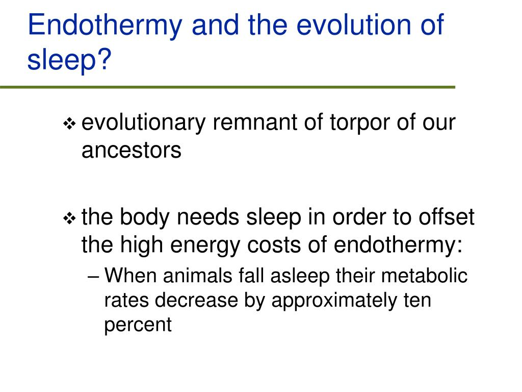 Endothermy and the evolution of sleep?