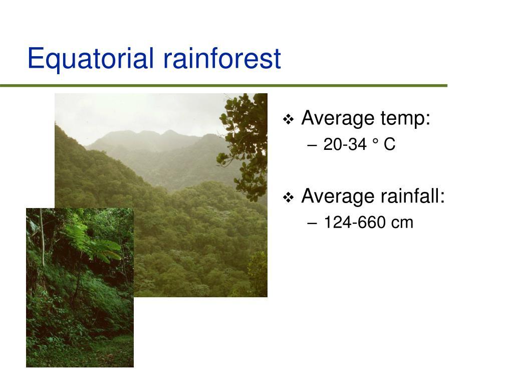 Equatorial rainforest