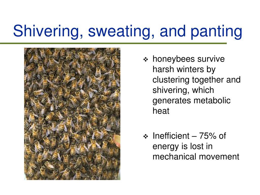 Shivering, sweating, and panting