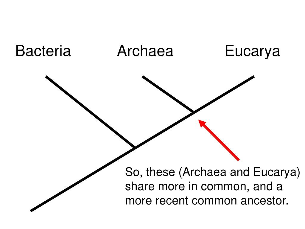 Bacteria           Archaea            Eucarya