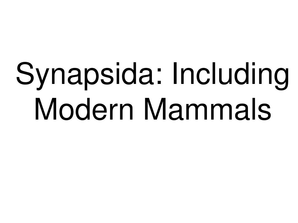 Synapsida: