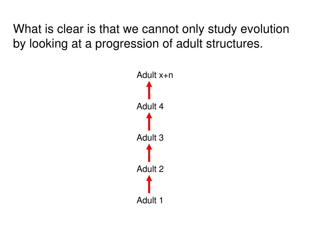 What is clear is that we cannot only study evolution by looking at a progression of adult structures.