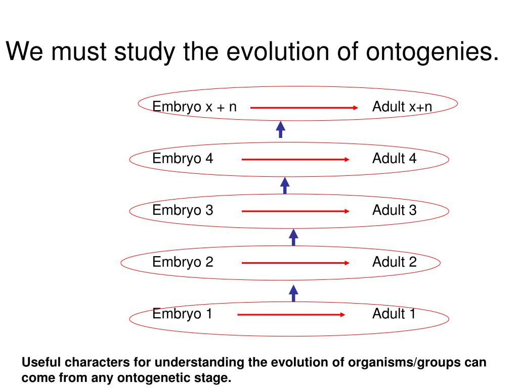 We must study the evolution of ontogenies.