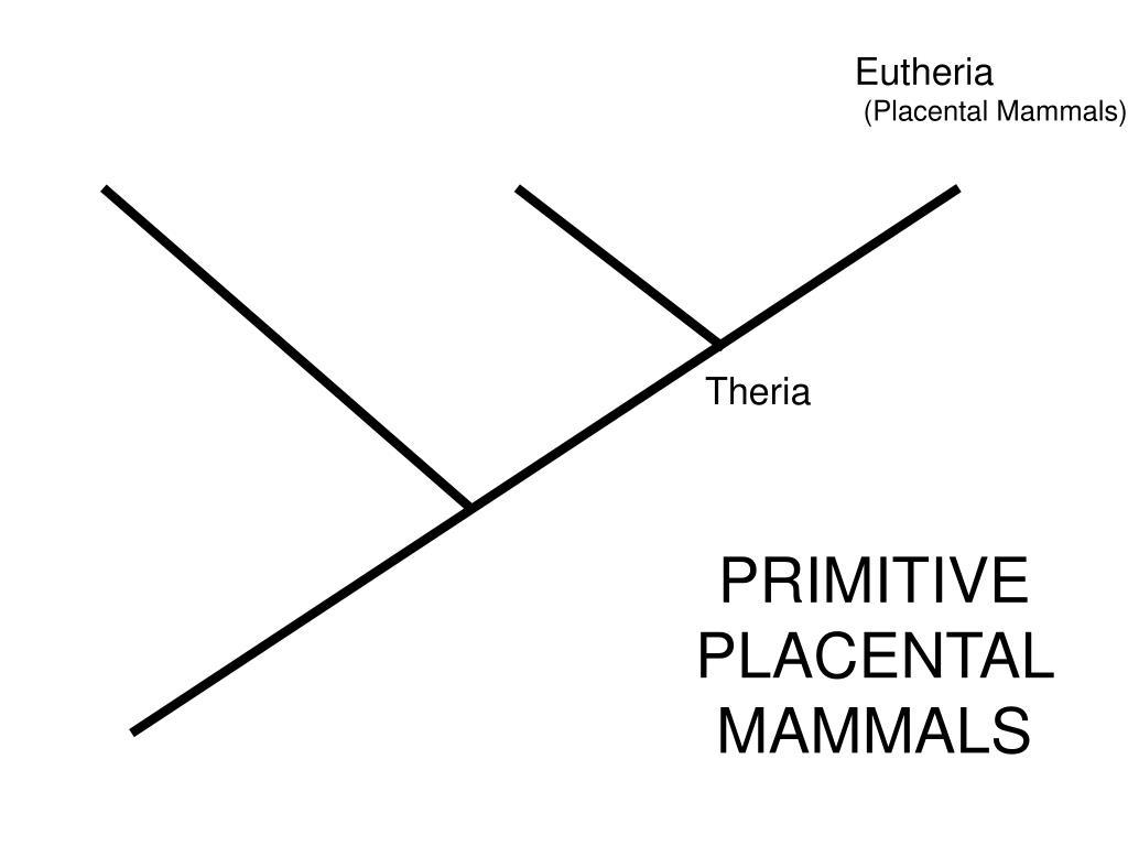 Monotremata                    Metatheria