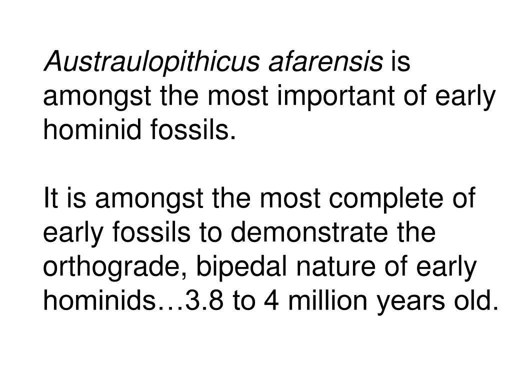 Austraulopithicus afarensis