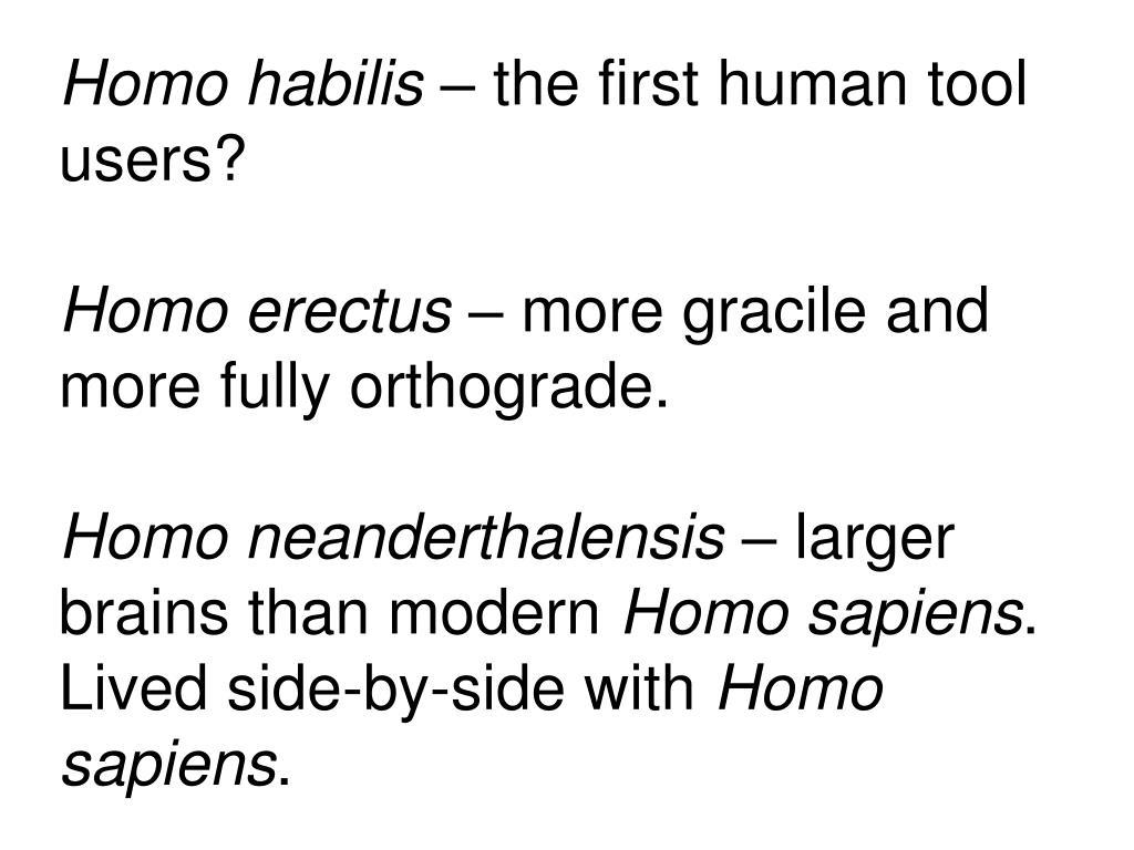 Homo habilis