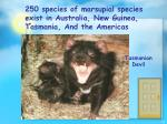 250 species of marsupial species exist in australia new guinea tasmania and the americas