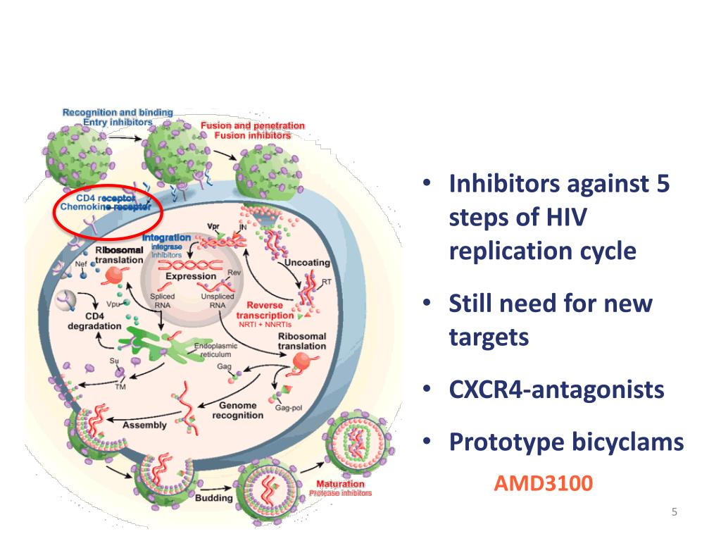 Inhibitors against 5 steps of HIV replication cycle