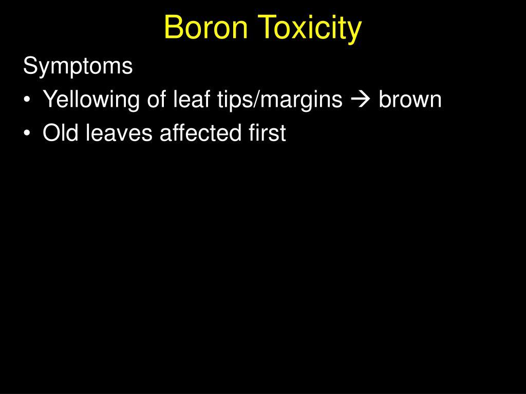 Boron Toxicity