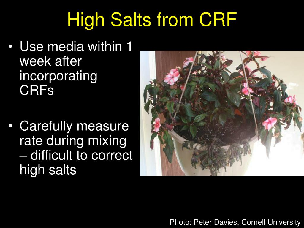 High Salts from CRF