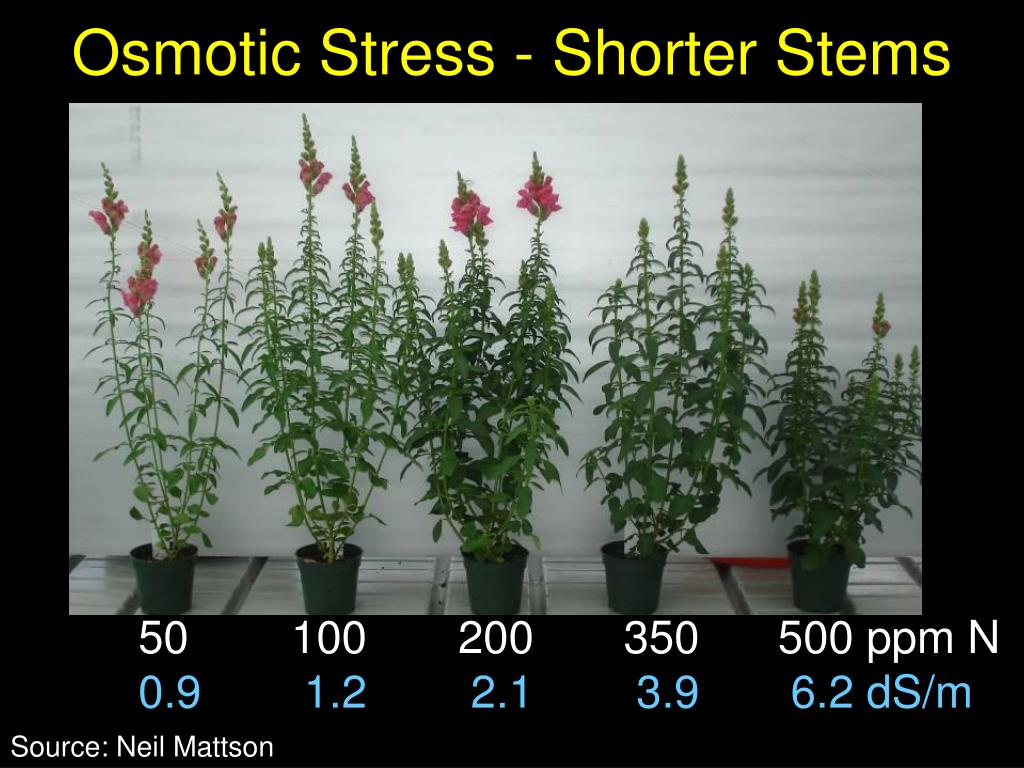 Osmotic Stress - Shorter Stems