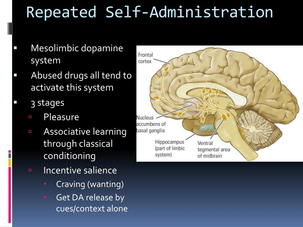 Repeated Self-Administration