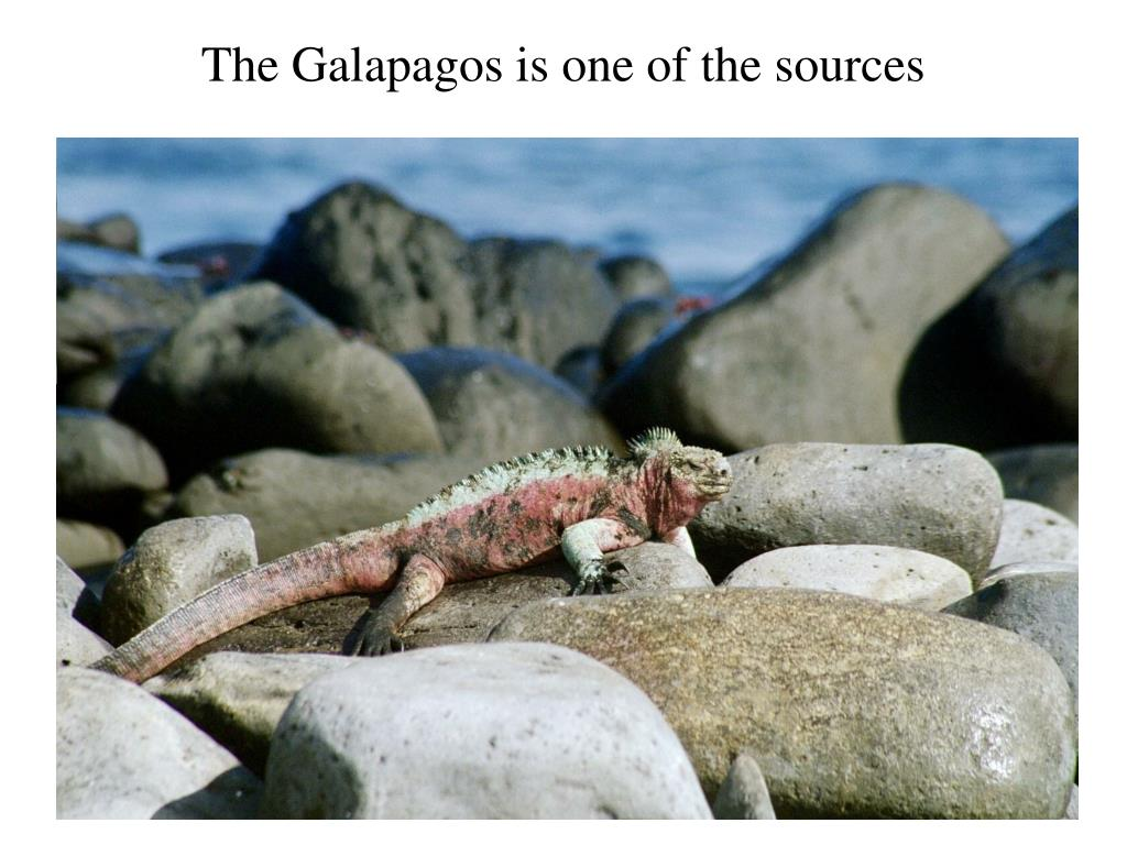 The Galapagos is one of the sources