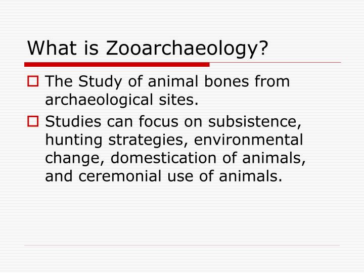 What is zooarchaeology