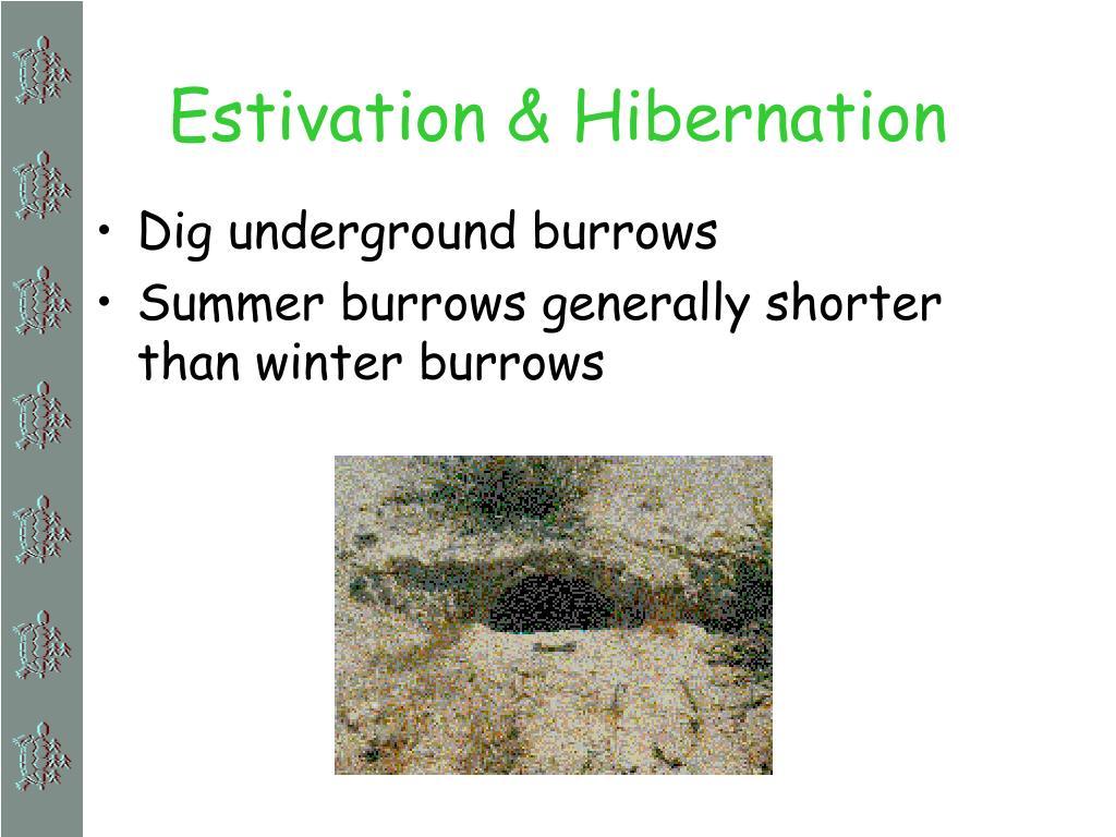 Estivation & Hibernation