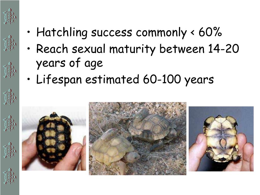 Hatchling success commonly < 60%