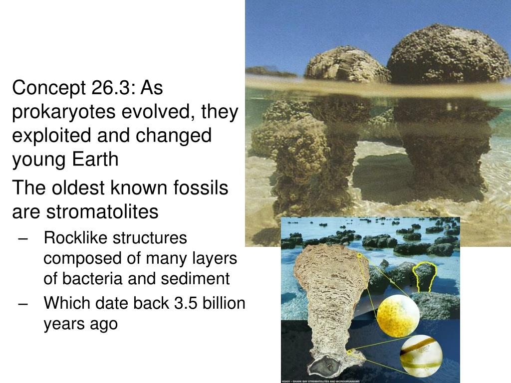 Concept 26.3: As prokaryotes evolved, they exploited and changed young Earth
