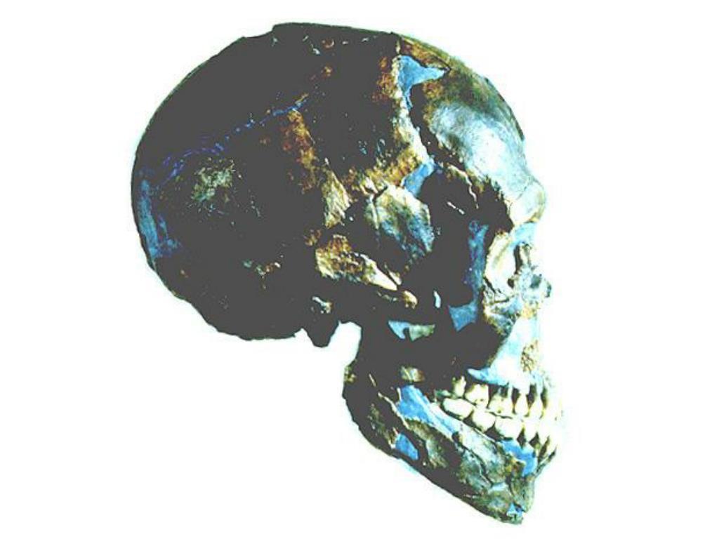 Ancestors II