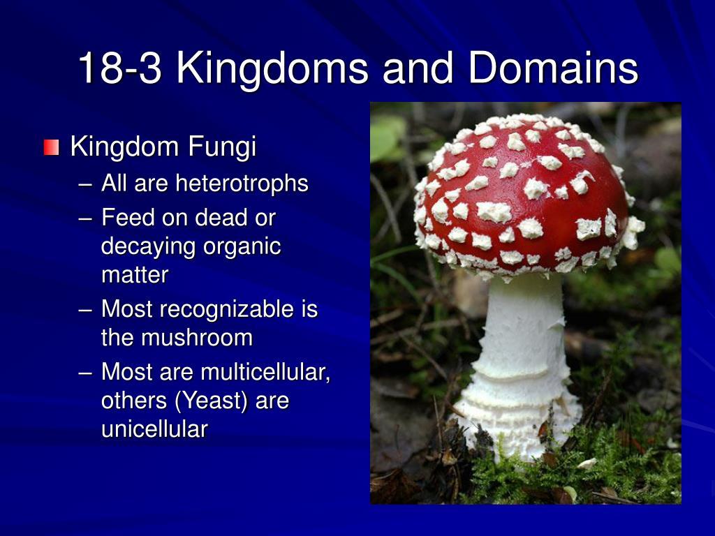 18-3 Kingdoms and Domains