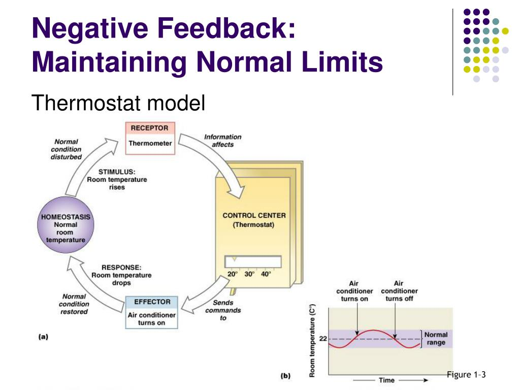 Negative Feedback: Maintaining Normal Limits