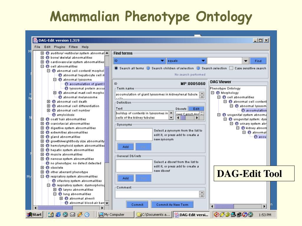 Mammalian Phenotype Ontology