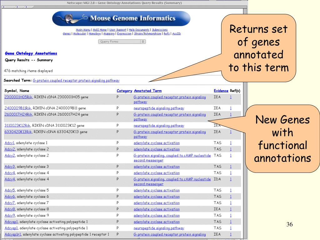 Returns set of genes  annotated to this term