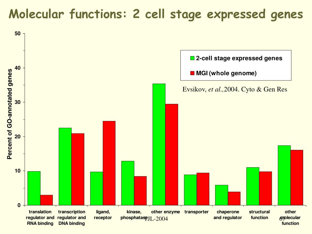 Molecular functions: 2 cell stage expressed genes