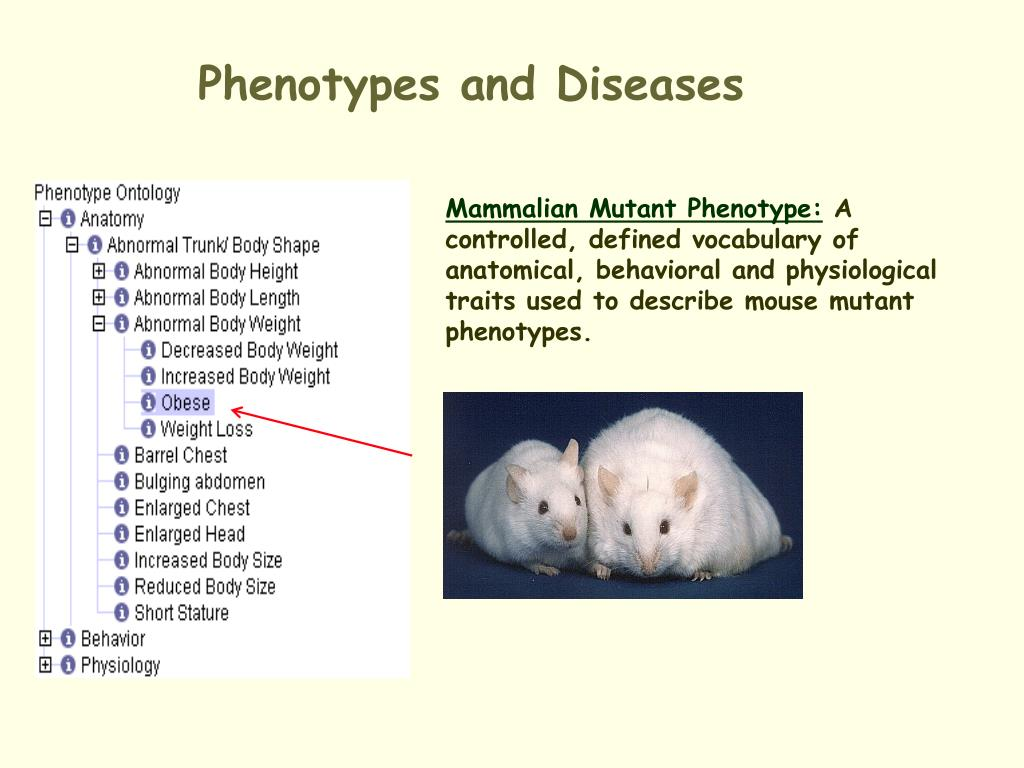 Phenotypes and Diseases