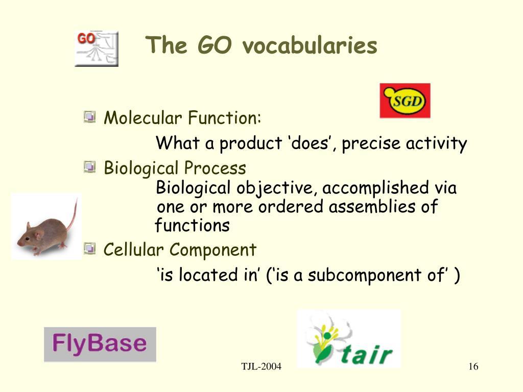 The GO vocabularies