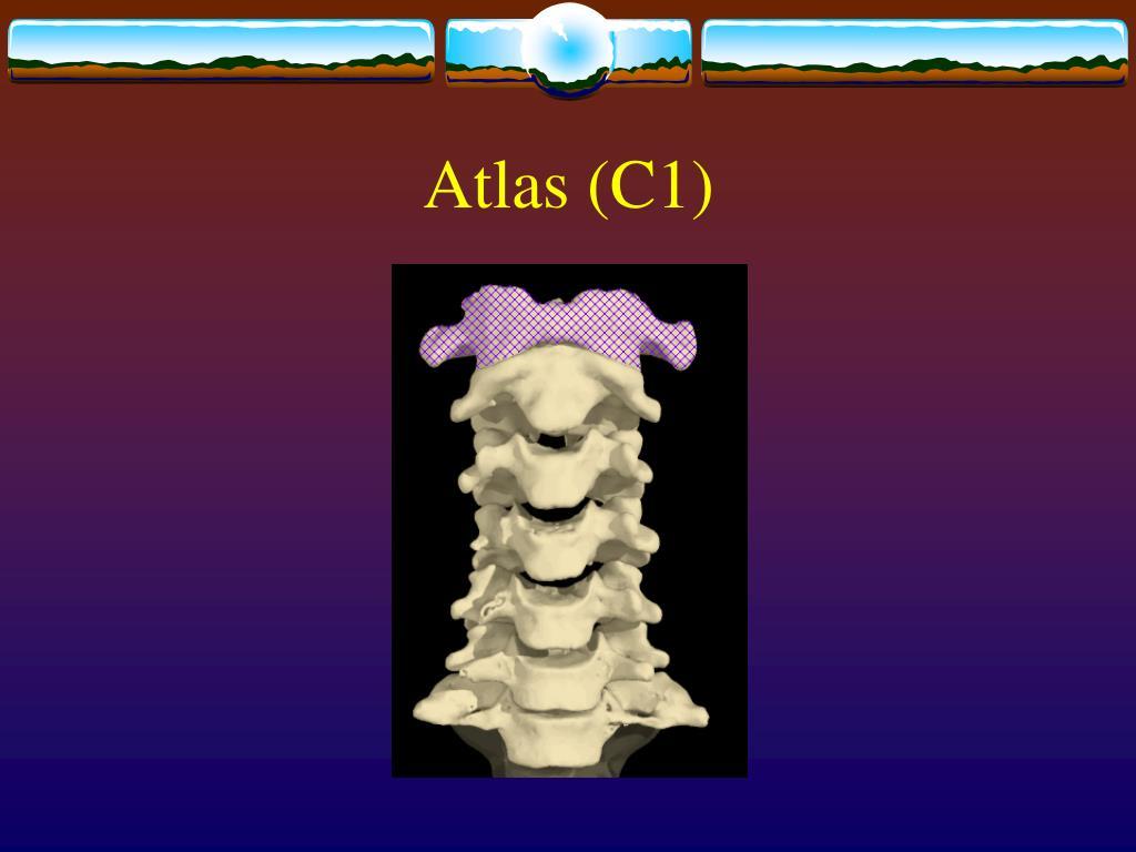 Atlas (C1)