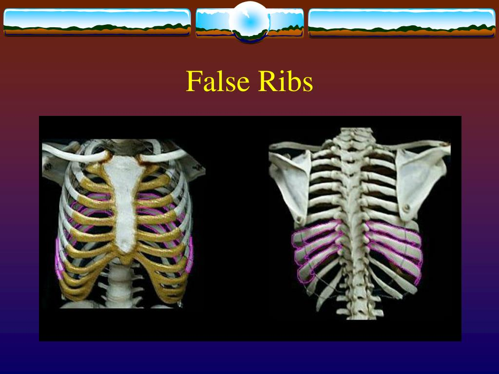 False Ribs