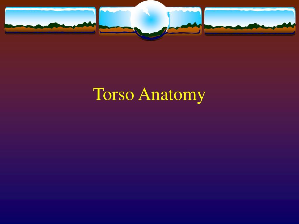 Torso Anatomy