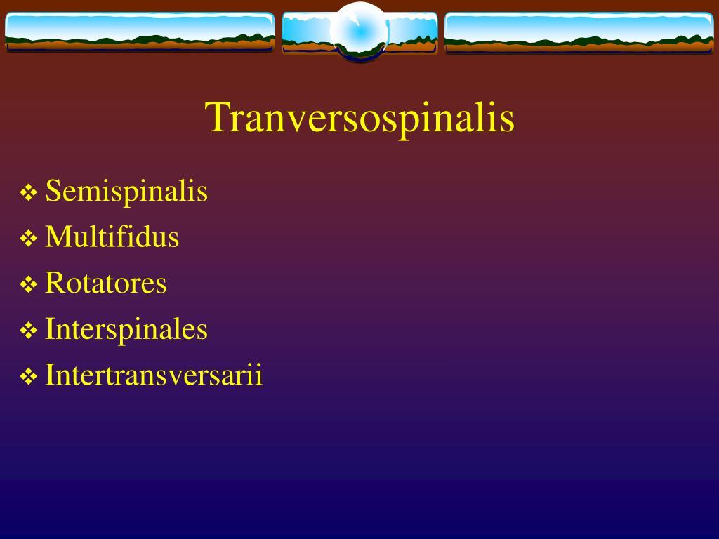 Tranversospinalis