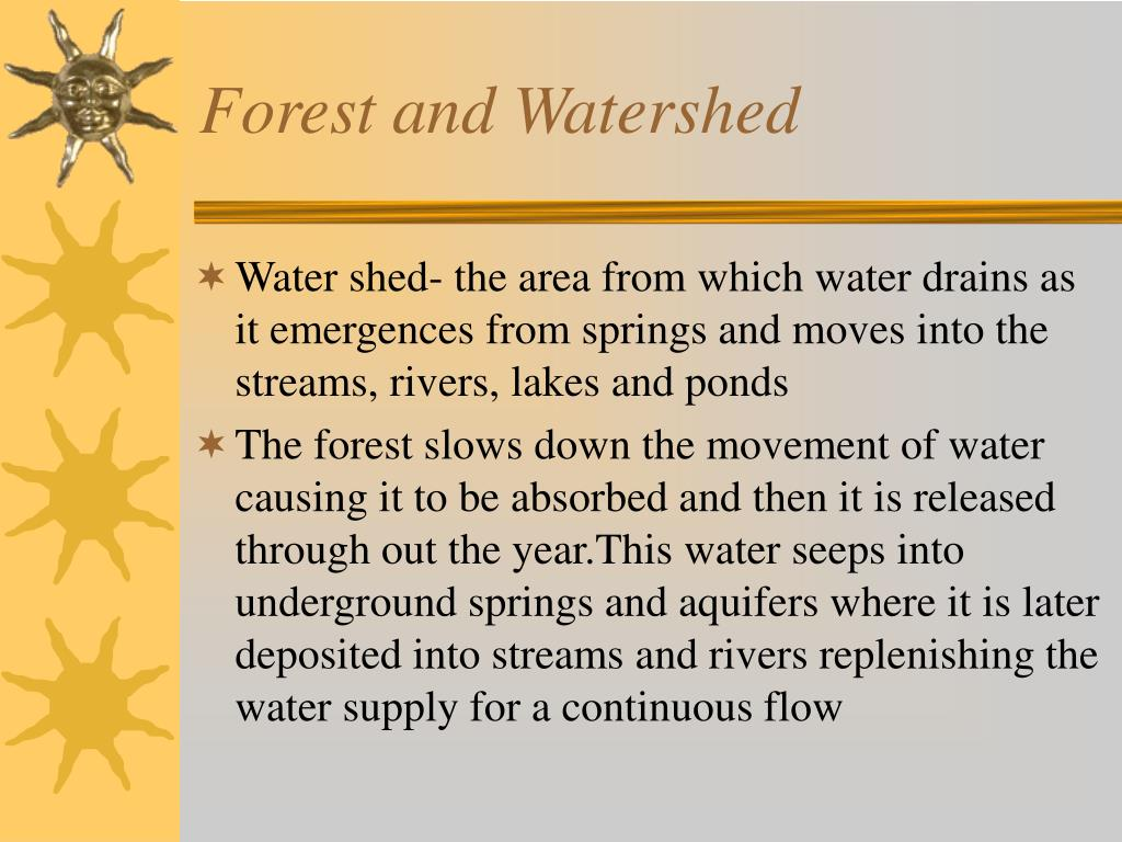 Forest and Watershed