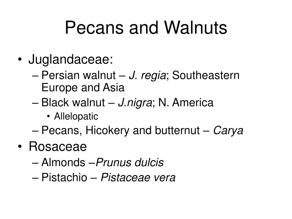 Pecans and Walnuts