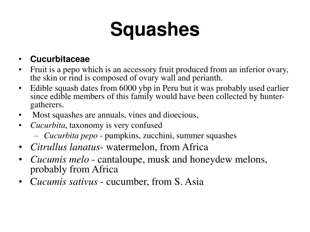 Squashes