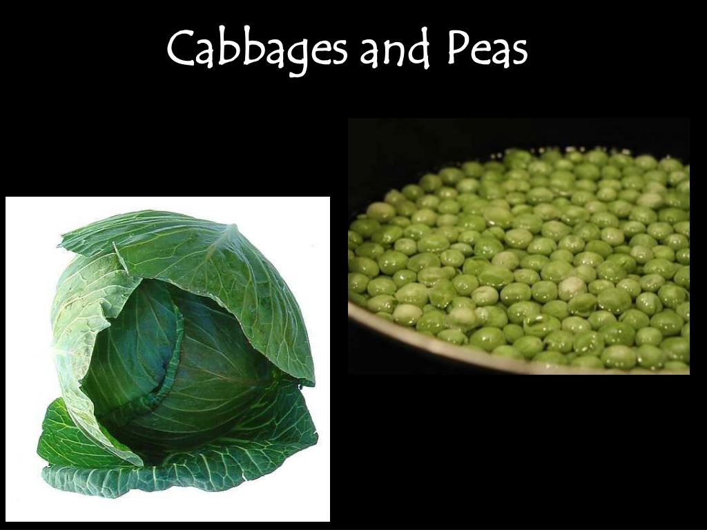 Cabbages and Peas