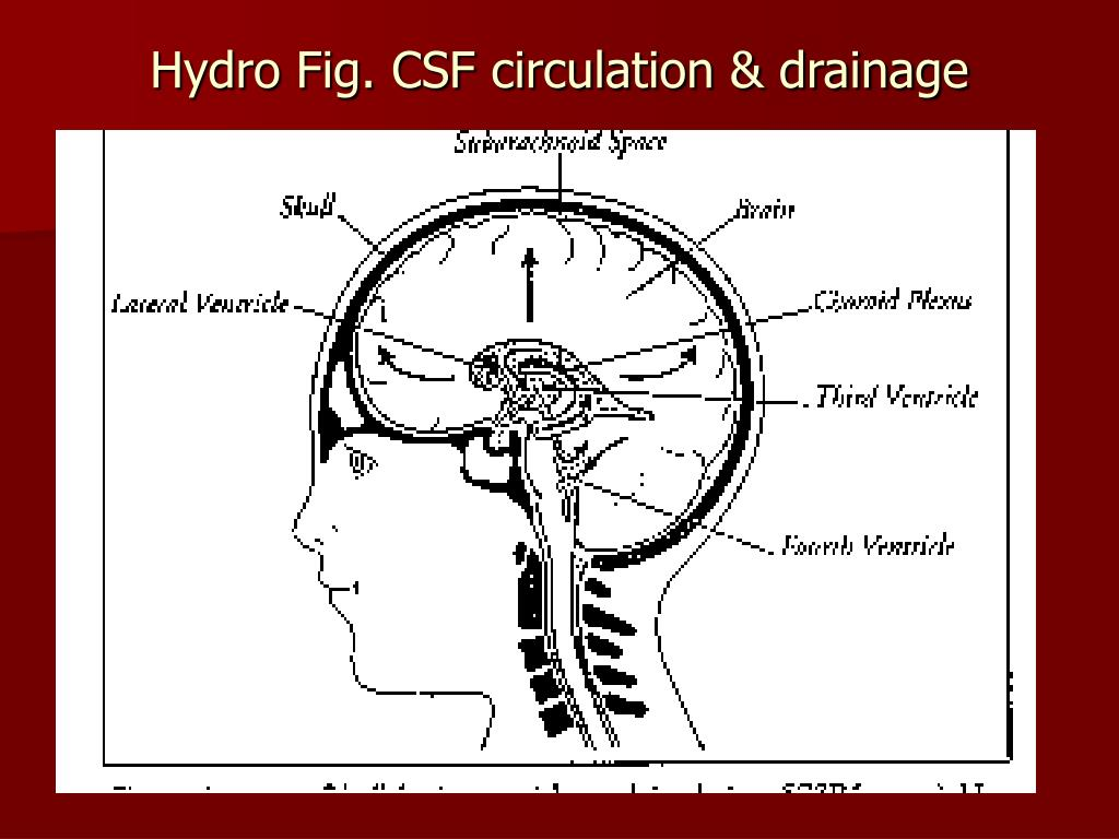 Hydro Fig. CSF circulation & drainage