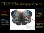 cn ix glossopharyngeal nerve26