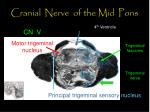 cranial nerve of the mid pons50